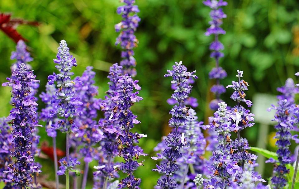 Cele mai cunoscute plante medicinale si beneficiile lor